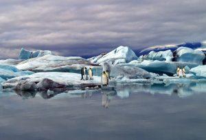 Jökulsarlon - 3289 mit Pinguinen