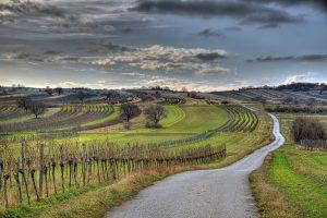 Weingegend Neusiedlersee 2