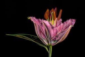 Flowers_2444